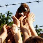 Green Hill bis: assolti i veterinari pubblici e i dipendenti