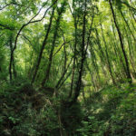 """Foreste: """"La nuova legge punta solo a estrarre legname dai boschi"""""""