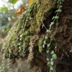 Biofilia: ecco come la natura può cambiarci la vita