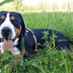 Il cane quotidiano: come aiutare i cani a vivere meglio