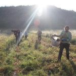 Lascia il call center e viaggia tra ecovillaggi e fattorie