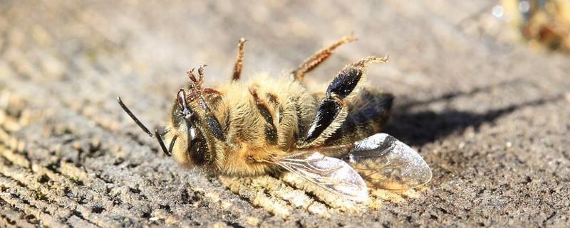 agricoltura-friuli-api