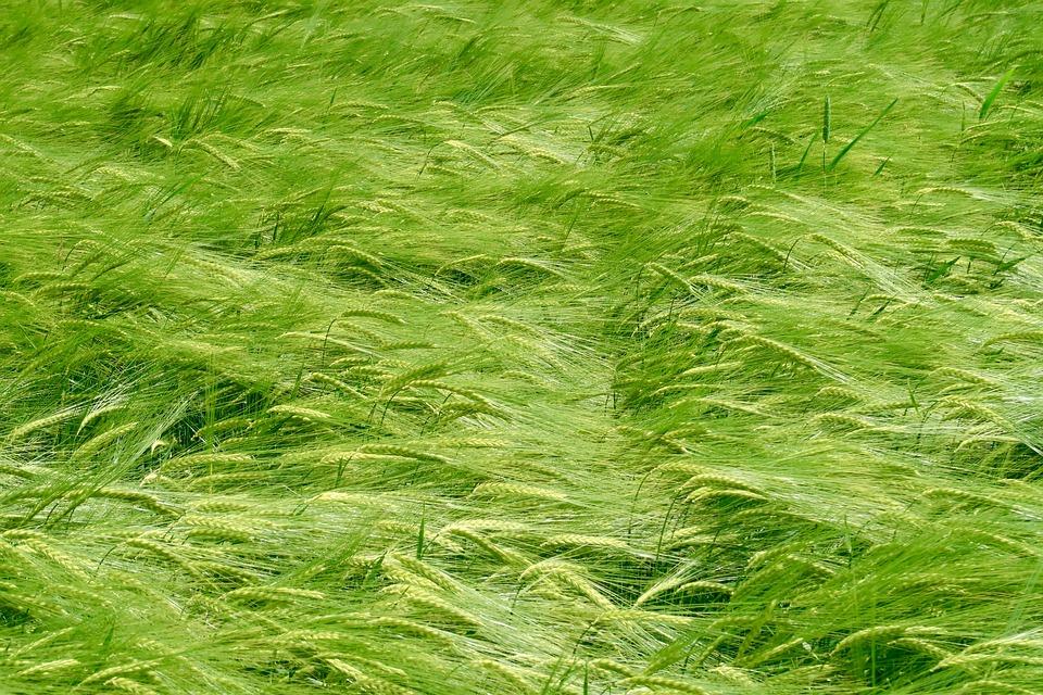 agricoltura-friuli