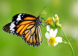 effetto-farfalla-1