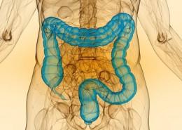 intestino18