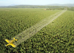 no ai pesticidi 4_ant