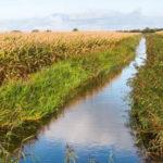 Le acque italiane sono piene di pesticidi