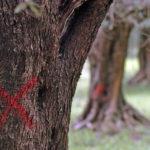 """Xylella: e se """"fastidiosa"""" fosse la nostra agricoltura?"""