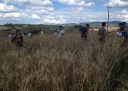 ceccarelli-mescolate-contadini