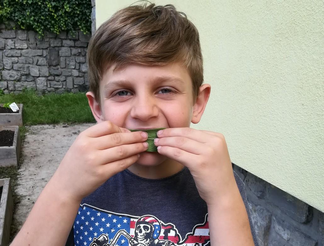 Le foglie di salvia sono un ottimo spazzolino naturale!