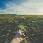 Torna il premio letterario dedicato alla cultura contadina