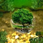 Il nuovo paradigma ecologico-sistemico e le relazioni organizzanti