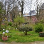"""Il """"Giardino Sostenibile"""", la mostra-mercato all'Orto Botanico di Torino"""