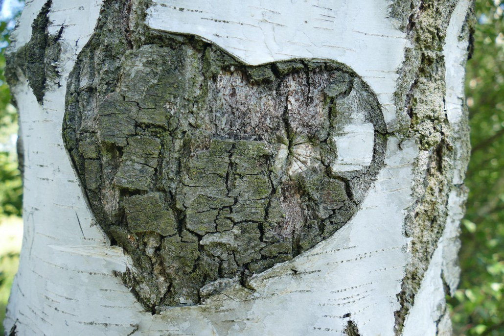 intelligenza-cardiaca-2