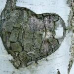 L'intelligenza cardiaca: pensiamo con il cuore!
