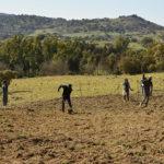 Io faccio così #218 – Semene: economia e comunità ripartono dal grano