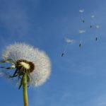Attitudine Mindfulness: imparare a lasciare andare