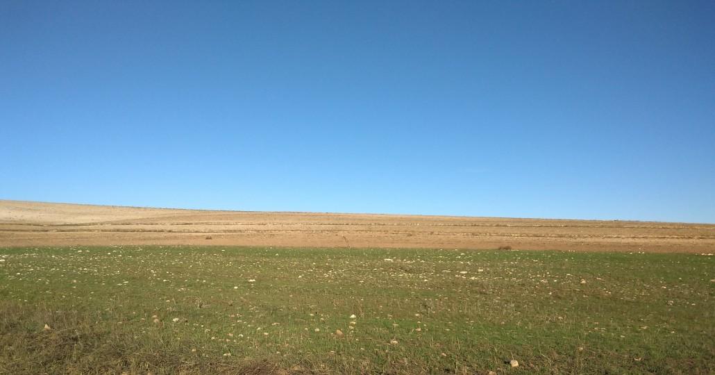 È già visibile la differenza tra il suolo brullo arato e il suolo in via di rigenerazione dell'ecosystem restoration camp