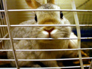 rabbits_are_not_cage_animals_by_tahmahma-d4k5hdp