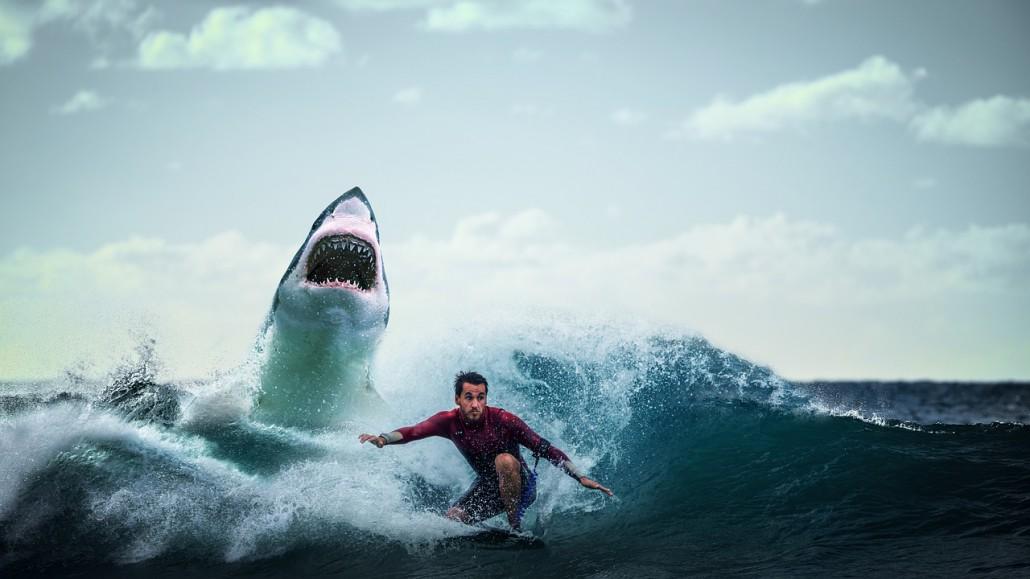 shark-3740292_1280
