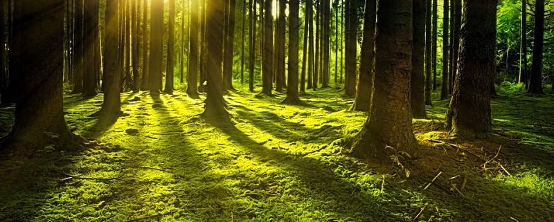 Gruppo Unitario per le Foreste Italiane ant