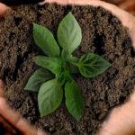 La TERRApeutica: la cura di sé parte dalla terra