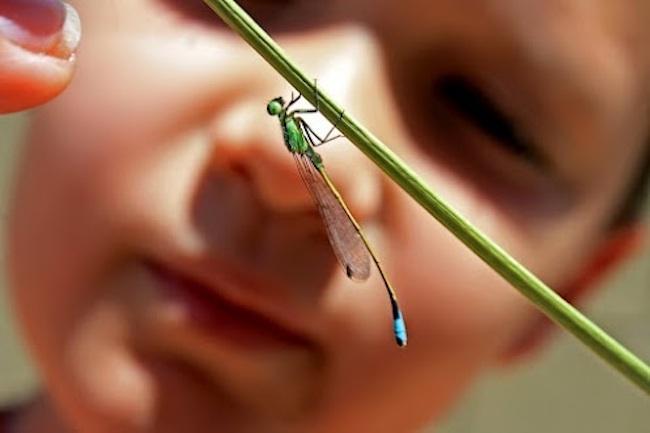 juguetes-educativos-para-observar-insectos-en-El-País-de-los-Juguetes