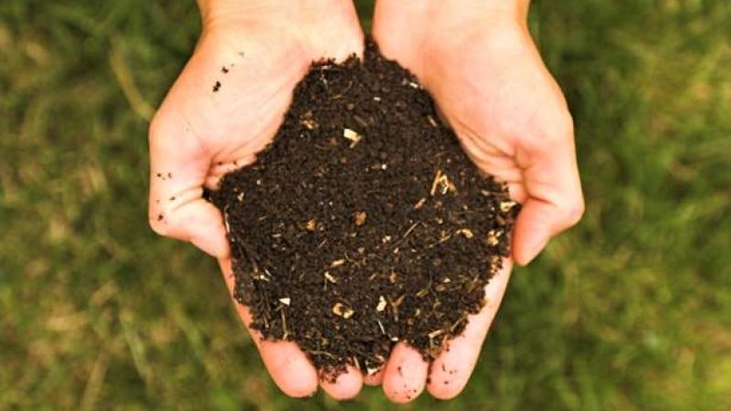 lombricoltura-clandestina-lombrichi-aiutano-pianeta