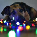 A Natale anche gli animali hanno diritto alla serenità