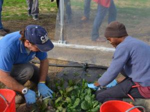 foto agricoltura sociale Welfare Lodigiano di Comunità