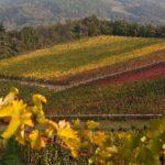 Oltrepò Pavese: bellezza e biodiversità a ritmo lento