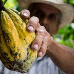 Biodiversità: rischiamo il collasso del sistema alimentare