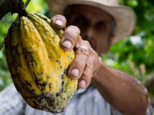 cocoa-452911_960_720