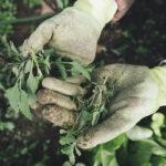 CAES e Assimoco per l'agricoltura sociale e biologica