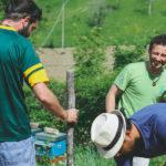 La tradizione della canapa: una scommessa vincente