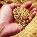 Una babele di semi: uno scambio all'insegna dell'autoproduzione e degli antichi saperi