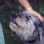 Eutanasia per gli animali: quali alternative?