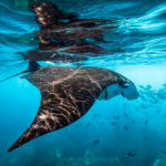 Ecco un piano per proteggere gli oceani entro il 2030