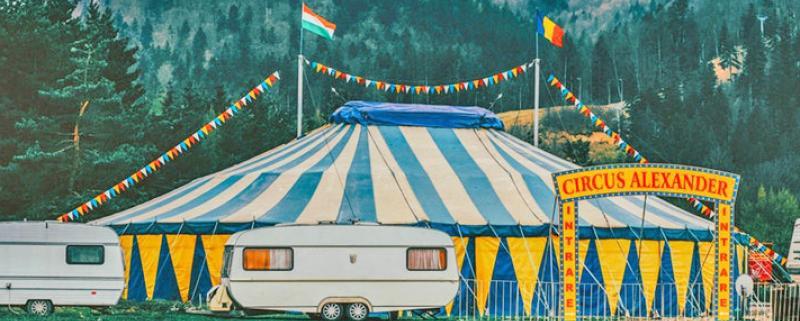 cuneo-no-sfruttamento-animali-nel-circo