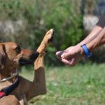 Cosa significa educare un cane?