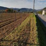La Marcia contro i pesticidi parte dal Veneto, terra di prosecco e tossicità
