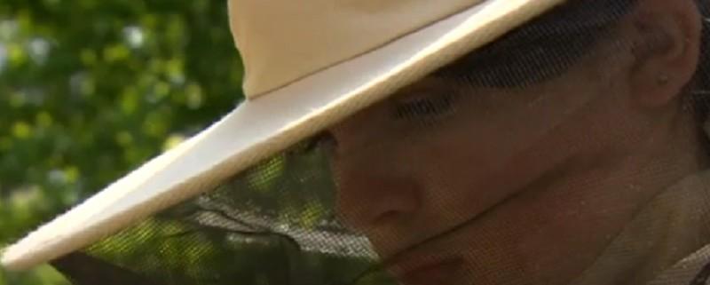 apicoltrice _ant