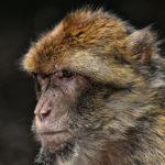Un milione di specie animali rischia l'estinzione