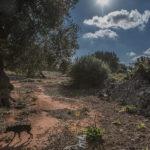 Xylella, opportunità o disastro ecologico?