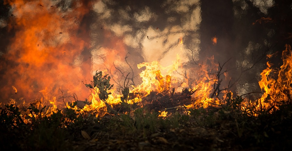 forest-fire-2268729_960_720 (1)