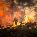 L'Amazzonia è in fiamme anche per colpa nostra