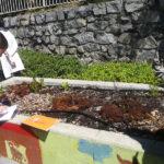 Una scuola a rischio chiusura rinasce e diventa Eco School