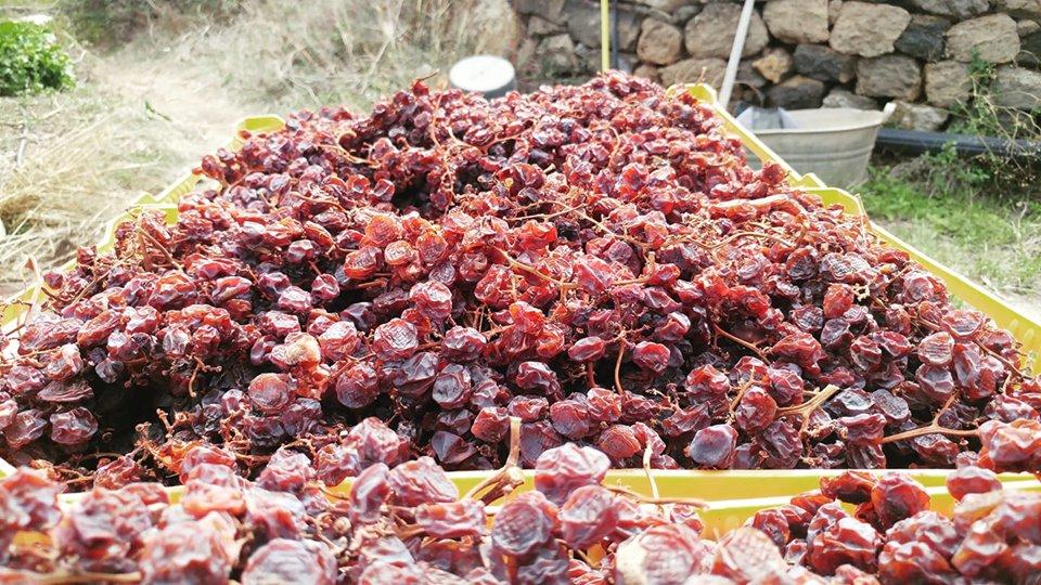 uva-passito-pantelleria