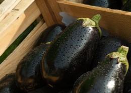 eggplant-1707629_960_720