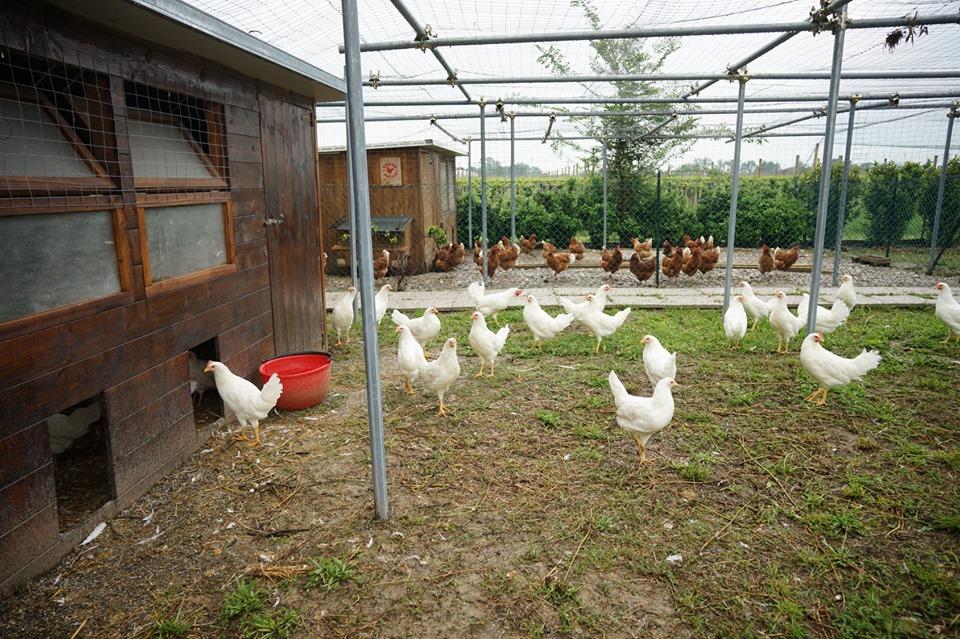 pollaio-sociale
